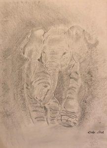 Elephant dessins au crayon Kate_Art Galerie
