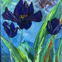Tulipes - Reines de la nuit